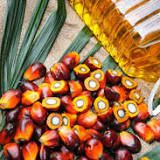 Malaysian Palm Oil Board